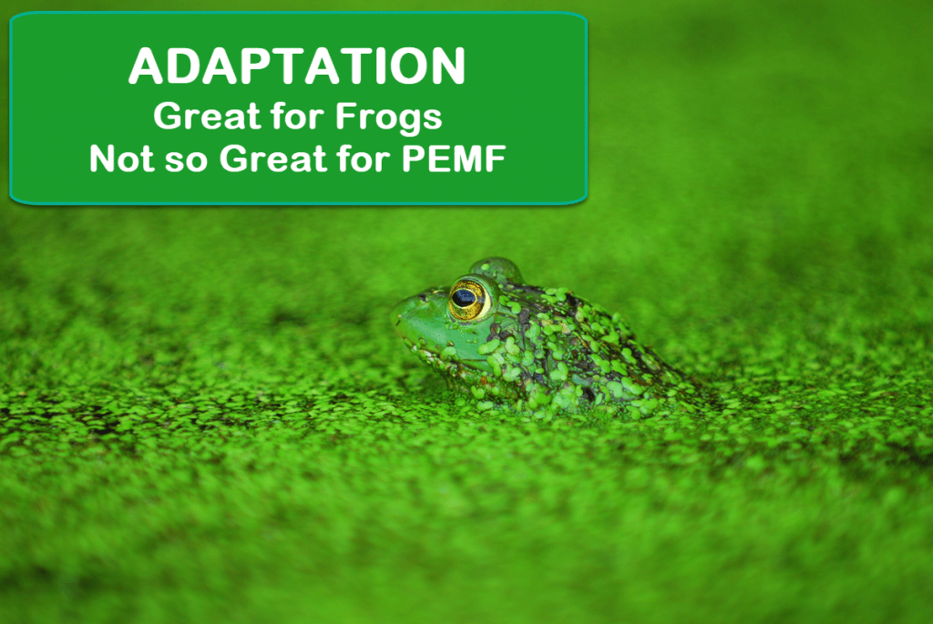 Frog Adapts - Frequency Adaptation