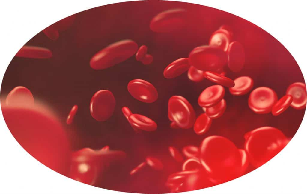 Blood cells. Blood flow of erythrocytes